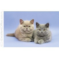 Kalendarz trójdzielny MICHALCZYK I PROKOP Koty